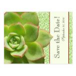Reserva suculenta verde de la marfil del damasco d postal