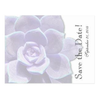 Reserva translúcida del Succulent de la lila la Postal