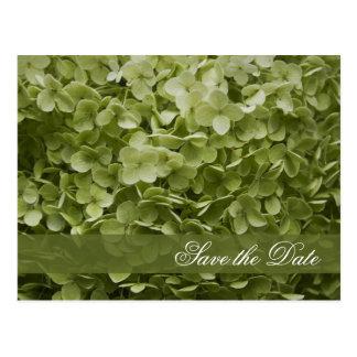 Reserva verde del boda del Hydrangea de Annabelle Postales