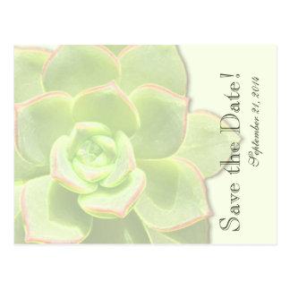 Reserva verde translúcida del Succulent la fecha Postal