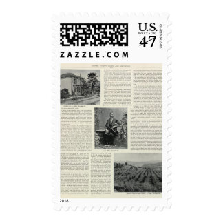 Residence and Orchard in California Postage