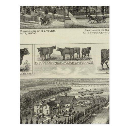 Residences and Stock Farm, Wichita, Kansas Postcard