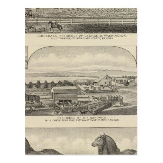 Residences, Farms, and Horses of Kansas Postcard