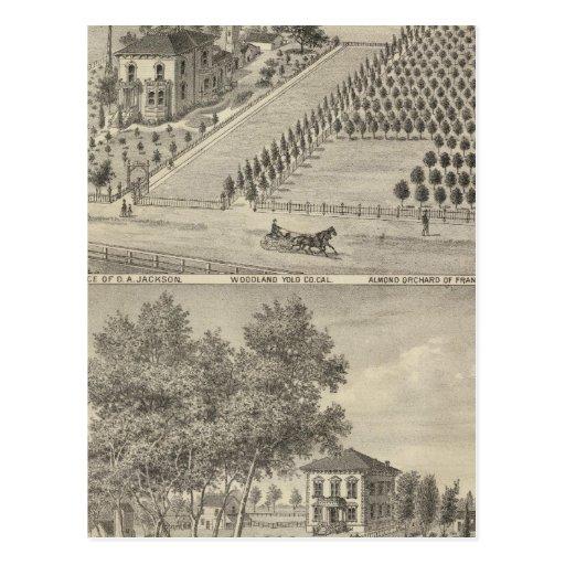 Residences Woodland, Knights Landing Postcard