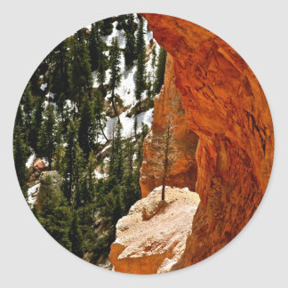 RESILIENT PINE TREE ON RED SANDSTONE ROCK CLASSIC ROUND STICKER