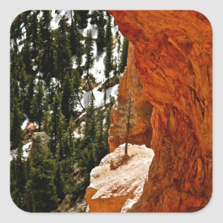 RESILIENT PINE TREE ON RED SANDSTONE ROCK SQUARE STICKER