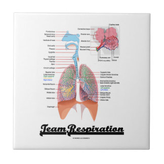 Respiración del equipo (sistema respiratorio) azulejo cuadrado pequeño