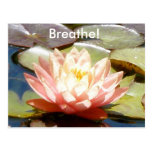 ¡Respire! Postal de Lotus