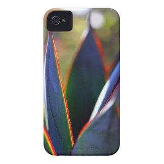 Resplandor azul del agavo iPhone 4 Case-Mate fundas