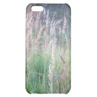 Resplandor crepuscular de la hierba del bosque