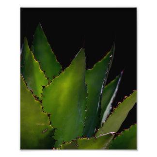Resplandor del agavo cojinete