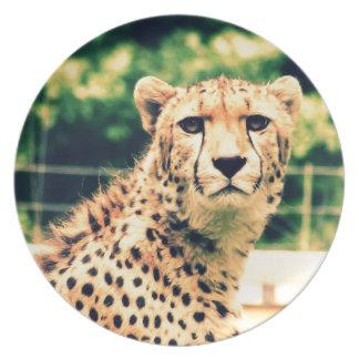 Resplandor del guepardo plato de comida