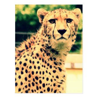 Resplandor del guepardo postal