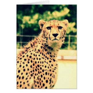 Resplandor del guepardo tarjeta de felicitación