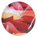Resplandor del otoño platos