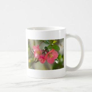 Resplandor rosado del membrillo floreciente taza de café