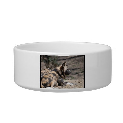 Resting African Wild Dogs Pet Food Bowls