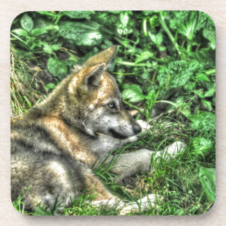 Resting Baby Wolf Pup Wildlife Photo Coaster