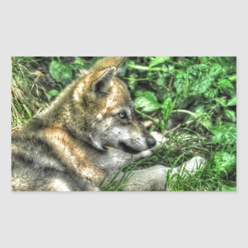 Resting Baby Wolf Pup Wildlife Photo Rectangle Sticker