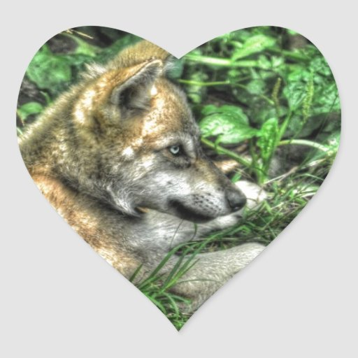 Resting Baby Wolf Pup Wildlife Photo Heart Stickers