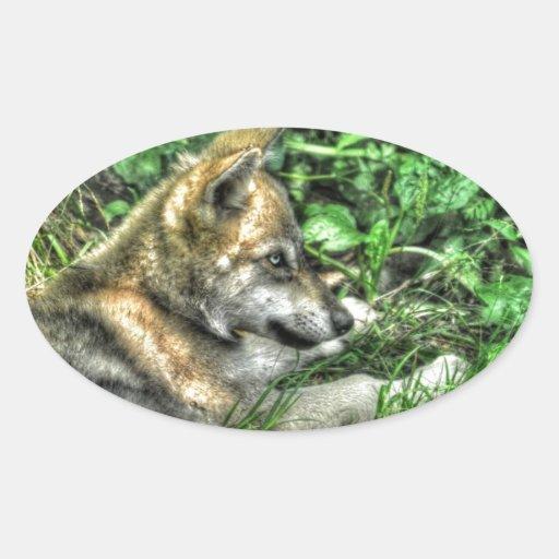 Resting Baby Wolf Pup Wildlife Photo Sticker