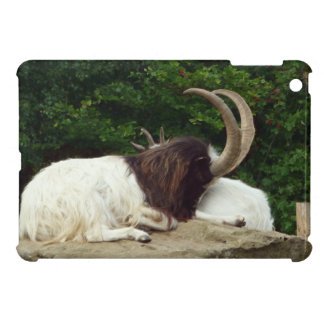 Resting Bagot Goat on Rock Photograph iPad Mini Case