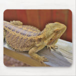 Resting Bearded Dragon 2 Mouse Pad
