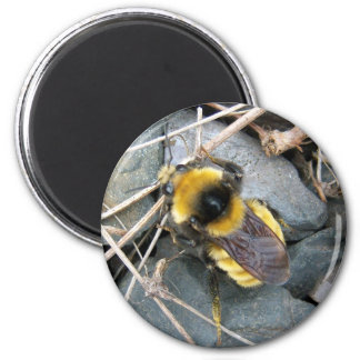 Resting Bee Magnet
