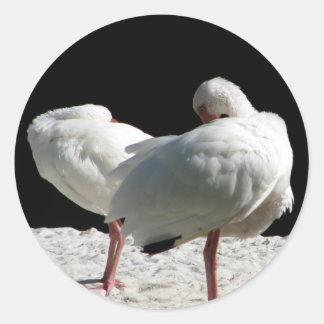 Resting Birds Classic Round Sticker