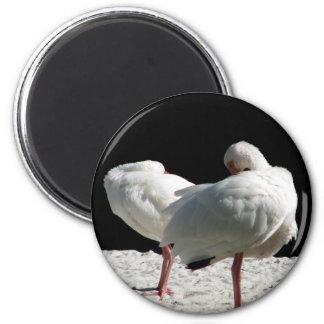 Resting Birds Fridge Magnet