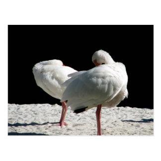 Resting Birds Post Cards