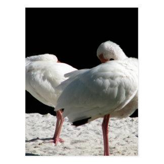 Resting Birds Postcard