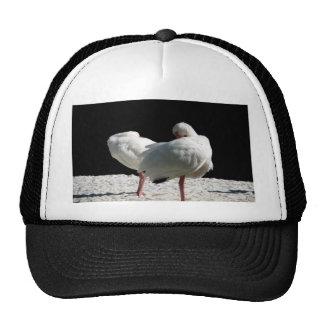 Resting Birds Trucker Hat