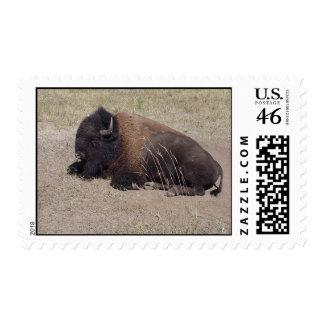 Resting Bison Stamp