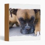 Resting Boxer Dog Binder