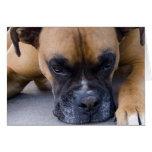 Resting Boxer Dog Greeting Card
