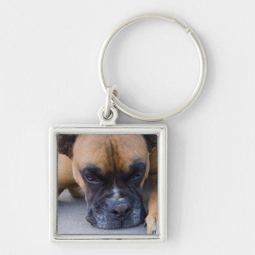 Resting Boxer Dog Keychain
