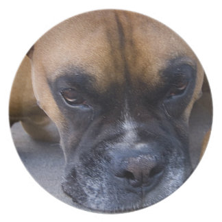 Resting Boxer Dog Plate