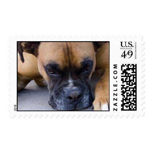 Resting Boxer Dog Postage Stamp
