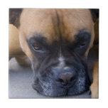 Resting Boxer Dog Tile