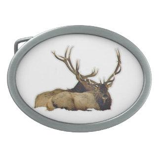 Resting bull elk belt buckle