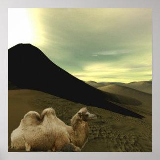 Resting Camel Poster