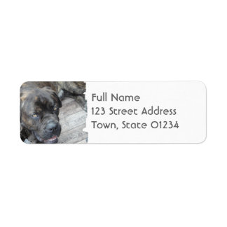 Resting Cane Corso Mailing Labels