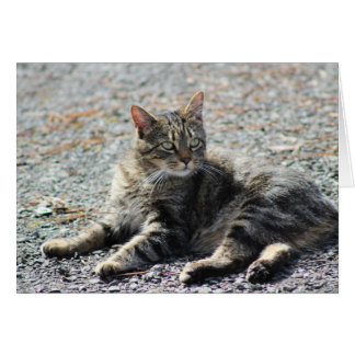 Resting cat in under the sun greeting card