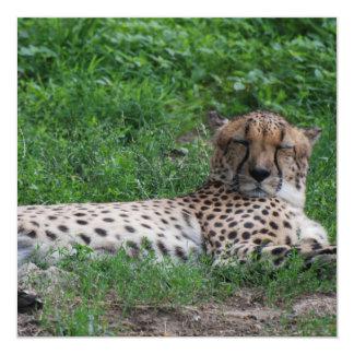 Resting Cheetah Invitations