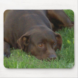 Resting Chocolate Lab Mousepad