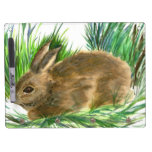 Resting Cottontail - watercolor Dry-Erase Whiteboards