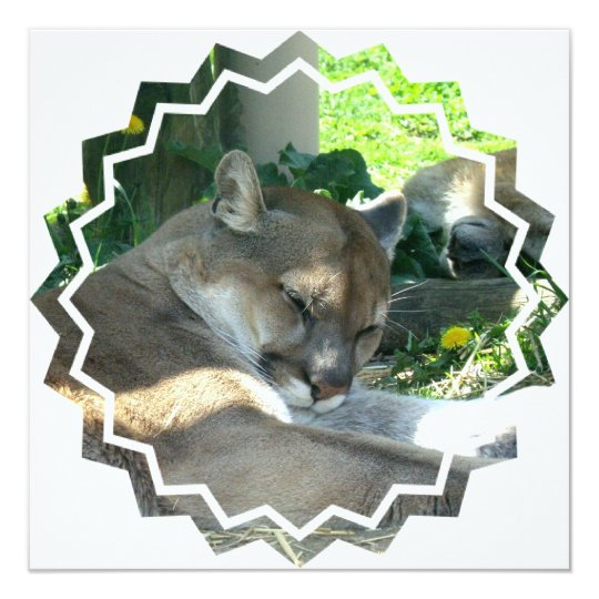 Resting Cougar Invitation
