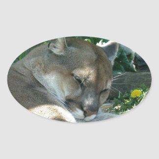 Resting Cougar Stickers