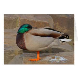resting duck stationery note card